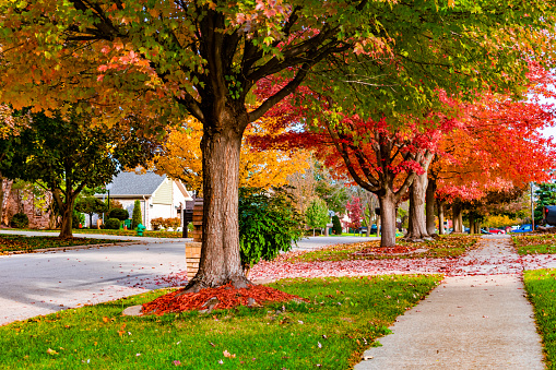 Fast Growing Shade Trees That Can Help With The Electric Bill