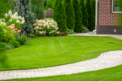 Tips To Bring Your Lawn Back To Life
