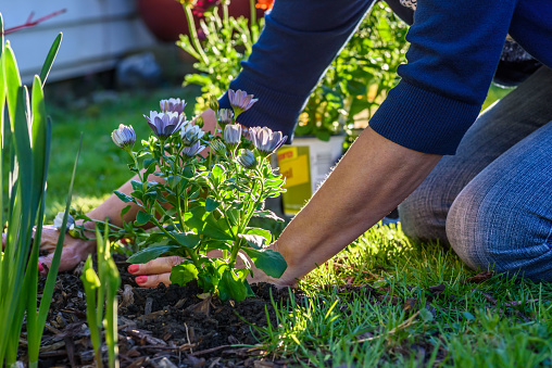 Perennial Garden Mistakes You Can Avoid