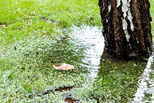Tips To Improve Landscape Water Drainage