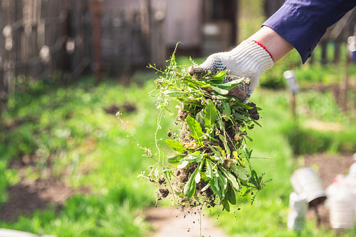 Tips for Effective Weed Control