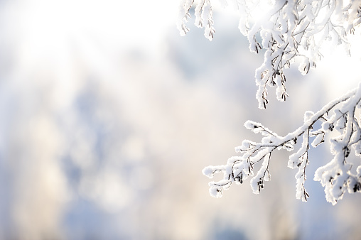 Tips To Care For Trees and Shrubs in the Winter