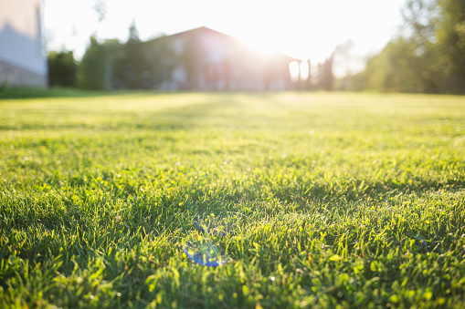 Benefits of Recycling Your Leaves and Grass