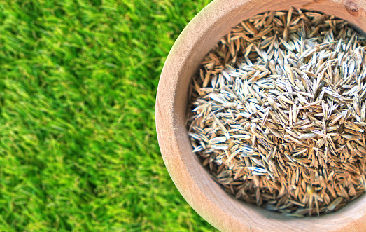 Spring Tasks To Foster A Healthy Lawn