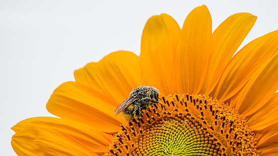 Flowers That Can Attract More Bees