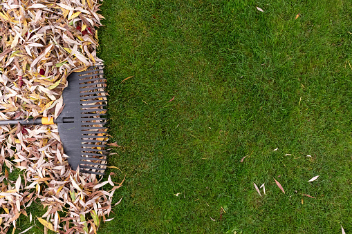 Fall Landscaping Mistakes To Know & Avoid